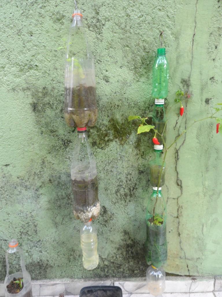 Horta Vertical - Olha que linda pimeiteira